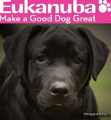 buoni crocchette Eukanuba
