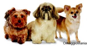 diventa tester cibo per cani Purina One