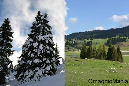 vinci vacanza a Folgaria in inverno o in estate