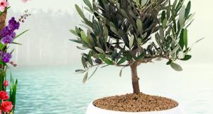 bonsai omaggio come premio sicuro da Palmolive