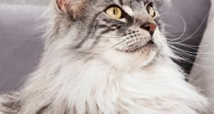 prodotti per gatti da testare gratis con Purina e The Insiders