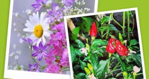vinci weekend con il concorso Store in fiore