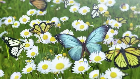 Conta le farfalle e vinci gadget RMC