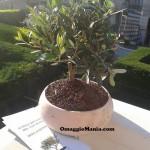 bonsai omaggio ricevuto da Elena