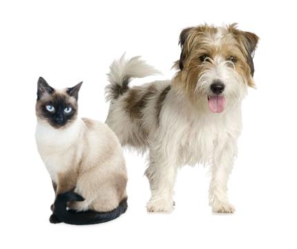 dona un pasto ai cani e gatti meno fortunati con Amici Onlus