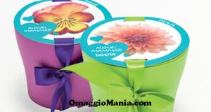 set per coltivare un fiore in omaggio da Tigotà