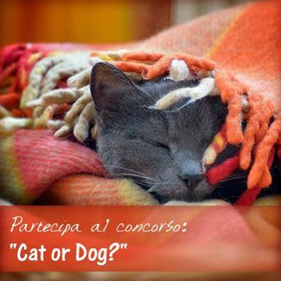 contest Carillo Biancheria per vincere plaid per cane o gatto
