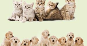 cibo per cani o gatti