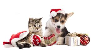 calendario da personalizzare gratis Purina PetPassion