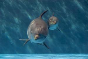 scegli il nome del delfino e vinci iPad