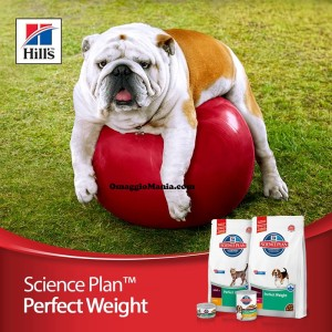 vinci Hill's Science Plan Perfect Weight
