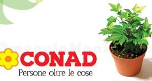 pianta omaggio Conad