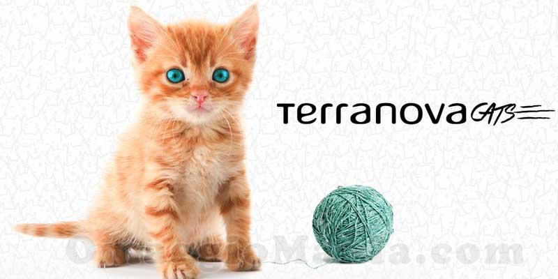 Terranova Cats