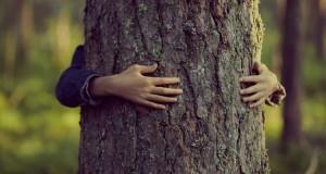 abbraccia un albero e vinci viaggio con WWF