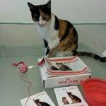 kit gatto ricevuto da Valeria