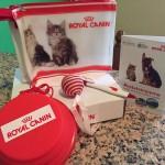 kit gatto ricevuto in omaggio da Silvia