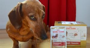 prodotti omaggio Royal Canin di Valentina