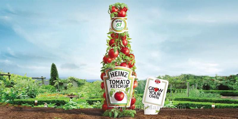 semi di pomodoro Heinz omaggio
