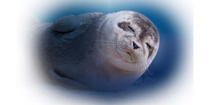 cucciolo di foca Acquario di Genova