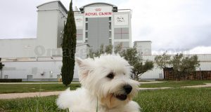 campus Royal Canin