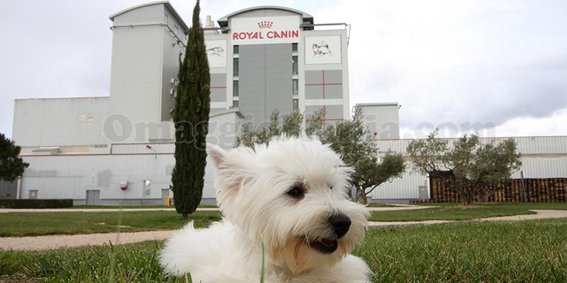 vinci gratis un weekend da sogno con royal canin - omaggiomania - Vinci Un Soggiorno Da Sogno A Venezia