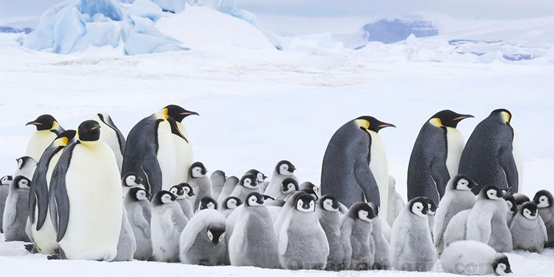 film La marcia dei pinguini - il richiamo