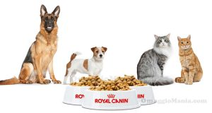 Royal Canin EstateInsieme 2017