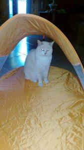 tenda da spiaggia Garnier Ambre Solaire di Saverio