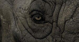 indizio rinoceronte TRND