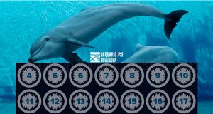 calendario Avvento Acquario di Genova 2017