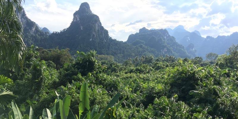 giungla thailandese