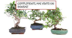 vincita bonsai Yakult