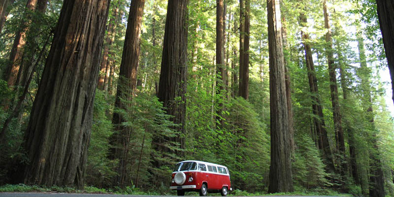 California Redwood National Park