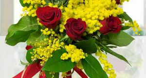 rose e mimose virtuali