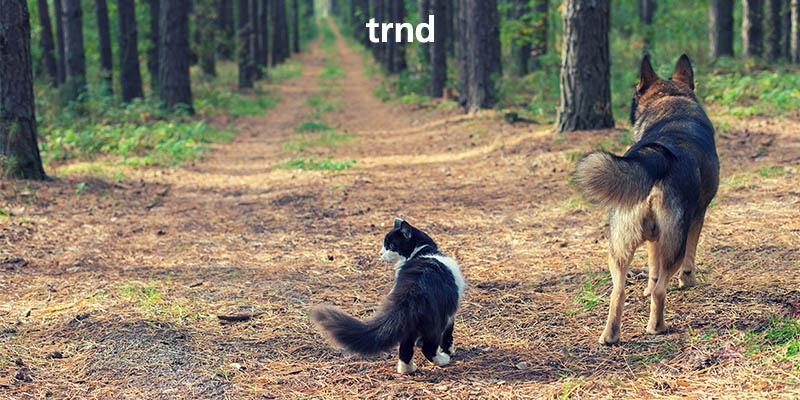 progetto contatto natura TRND anticipazione