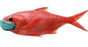 pesce d'aprile con mascherina
