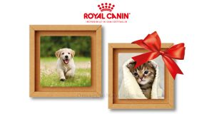 Royal Canin & Tonki