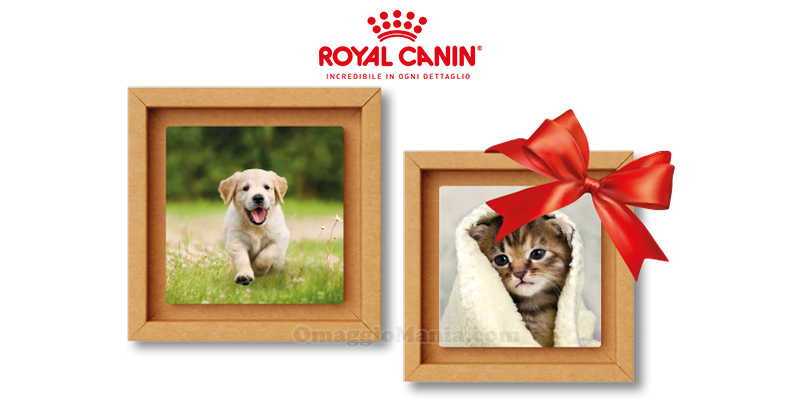 Royal Canin & Tonki