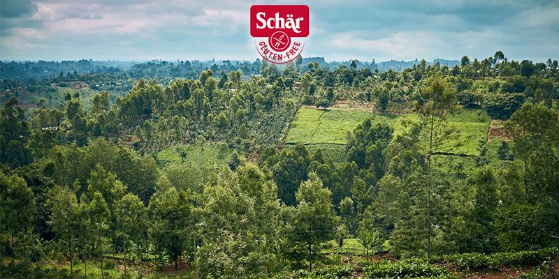 concorso La foresta Schär
